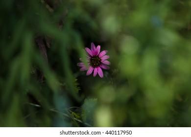 Hidden Flower Images Stock Photos Vectors Shutterstock