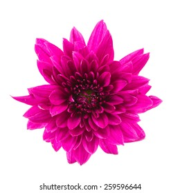 Purple flower isolated on white background