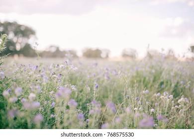 Purple flower Landscape