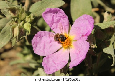Purple flower in the middle of the field helped by a bee