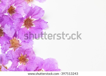 Purple flower name inthanin lagerstroemia macrocarpa stock photo purple flower name inthanin or lagerstroemia macrocarpa copy space mightylinksfo