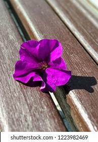 Purple flower on bench background