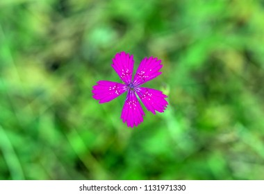 purple flower on a green background
