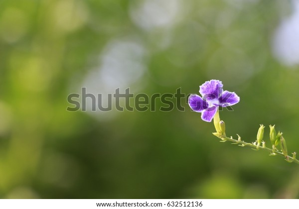 purple flower on the green background