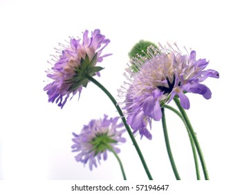Purple flower on the isolate white background