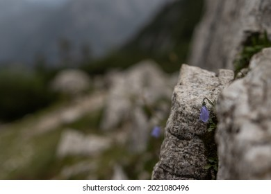 purple flower on a rock in Reka Pisnica in Slovenia on 16.07.2021 - Shutterstock ID 2021080496