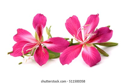 Purple flower white background images stock photos vectors purple flower on white background mightylinksfo
