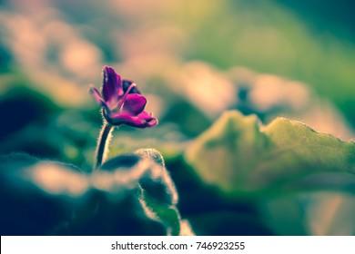 purple flower shallow dof