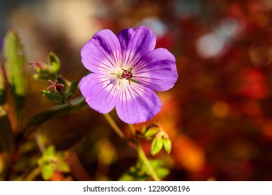 Purple flower and vibrant red bokeh background