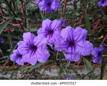 Purple Flowers (2)