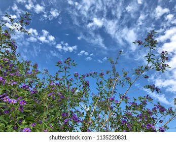 purple flowers against blue sky