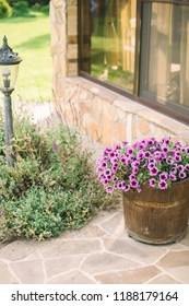purple flowers in a barrel, a pot of flowers is standing in the yard