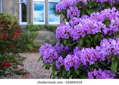 Purple flowers' features