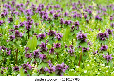 Purple flowers in the field in natural light