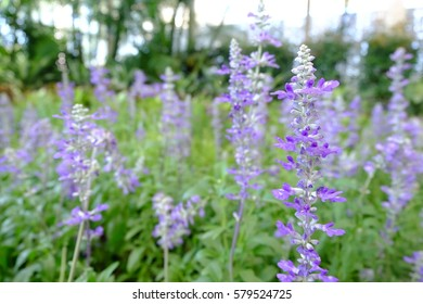 purple flowers in the field,summer or spring background.