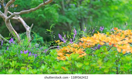 purple flowers and forests