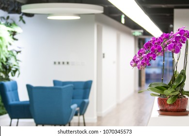 Purple flowers in front of the office reception area