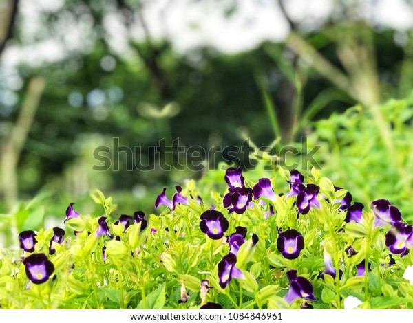 Purple flowers with green leafs in the garden, copy space, natural