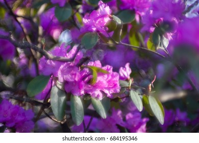 Purple flowers and green leaves in blurry style