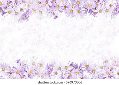 Purple Flowers Isolated Design On Top And Bottom Side Flower Transparent White Background