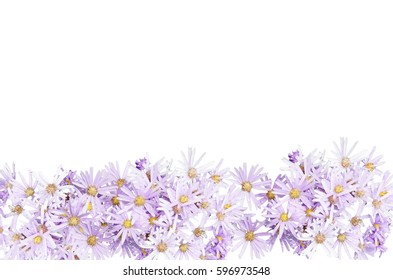 purple flowers isolated design on bottom side, white background
