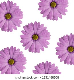 purple flowers isolated on white background