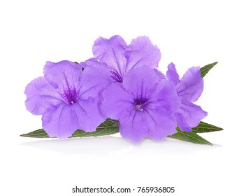 Purple flowers on white images stock photos vectors shutterstock purple flowers isolated on white background mightylinksfo