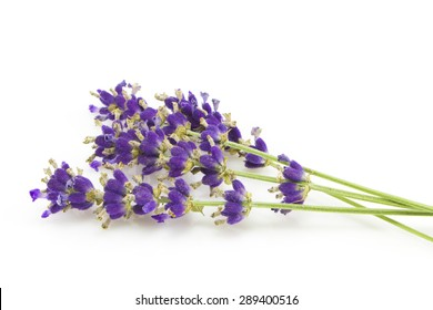 Purple Flowers of lavender isolated on white background