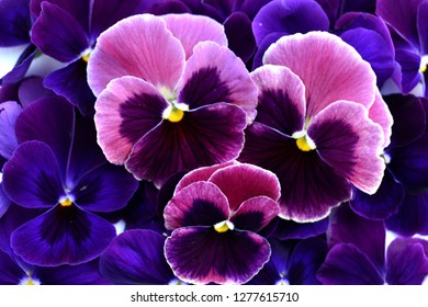 the purple flowers on the background