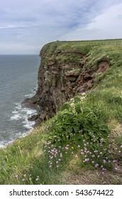 Purple flowers on a Cumbrian cliff edge.