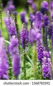 Purple flowers on the field