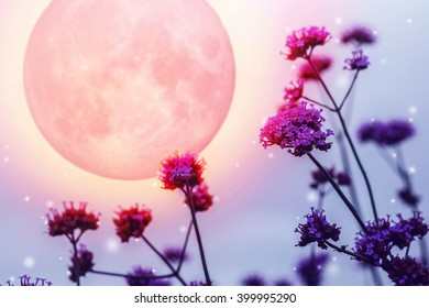Purple flowers on full moon night, Elements of this image furnished by NASA