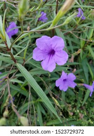 Purple flowers on green leaves and grass in nature.