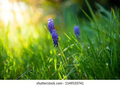 Purple flowers on meadow