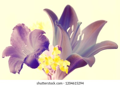 Purple flowers on pastel background. small bouquet. abstract colors.