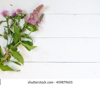 Purple flowers on a white background. Top view