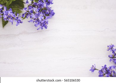 Purple flowers on white marble background with room for text