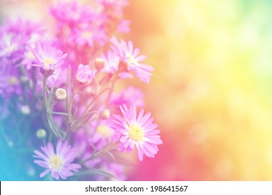 Purple flowers with pastel color filtered, sweet purple flowers on an old wood background.