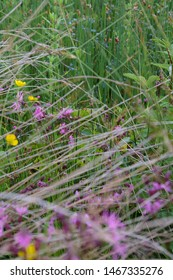 Purple flowers, reeds and leaves, behind blurred reeds in the foreground and blurred, blue flowers in the background.