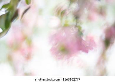 purple flowers reflection on water. blurred abstract photo