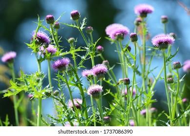 春の光の中の紫の花