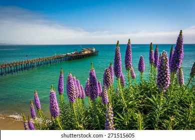 Purple flowers and view of the pier in Capitola, California.