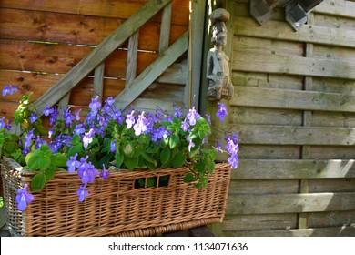 Purple flowers in a woven basket