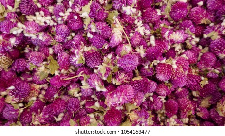 """Purple """"Globe Amarant  flower""""  Its Latin name: Gomphrena globosa.  Dried blossoms for a healthy, natural  tea, a natural remedy for flatulence, cought and laryngitis"""