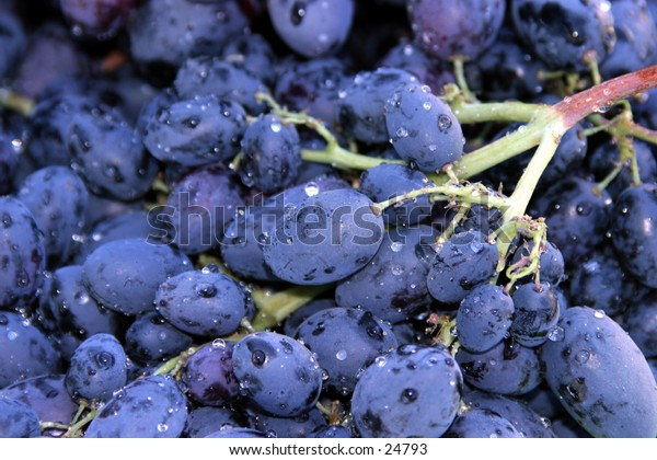 purple grapes piled high and ready for eating