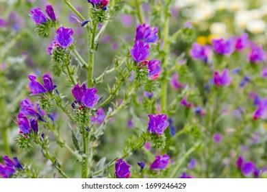 purple and green flower field