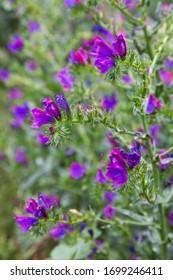 purple and green garden flowers