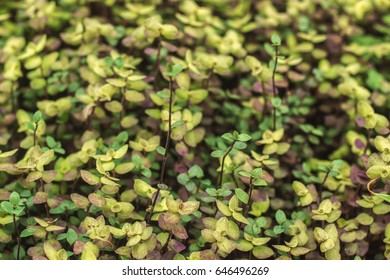 purple and green leaves background