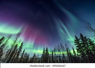Purple and green northern Lights swirling over pine trees
