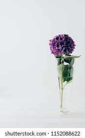 Flower vase images stock photos vectors shutterstock purple hydrangea flower in glass vase on white mightylinksfo